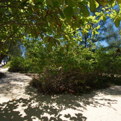 Environs du Naturalia Lodge